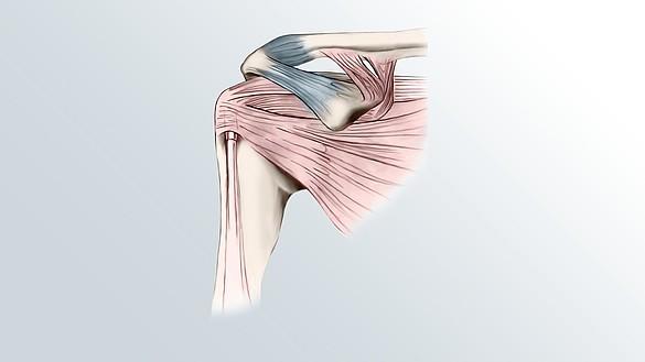 Schulter - Aufbau des Schultergelenks